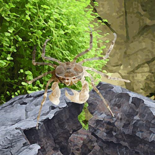 Crabe araignée (environ 1.5 cm)