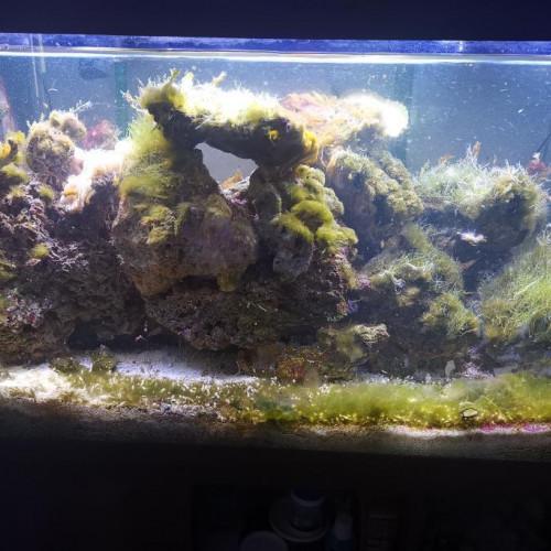 aquarium eau de mer 350 litres