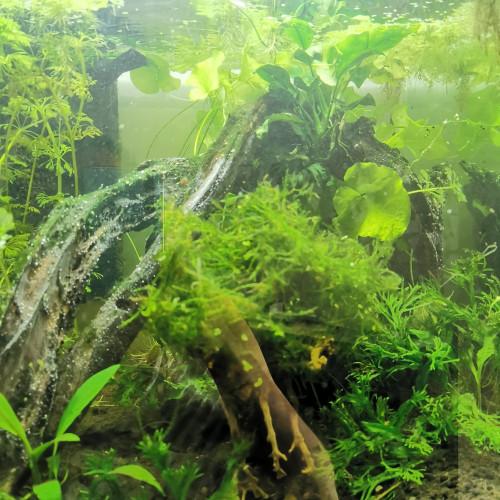 Aquarium 60L