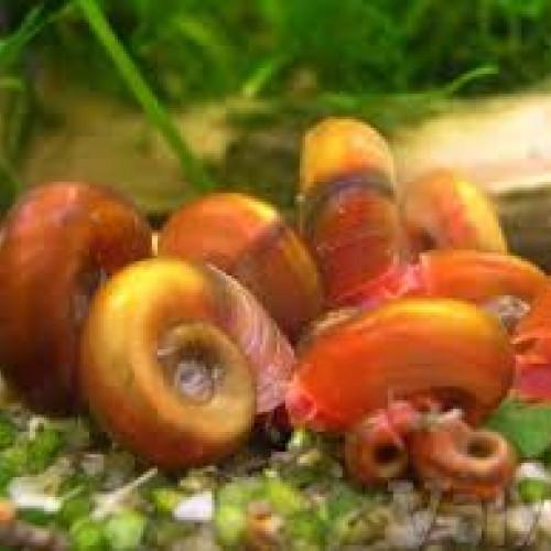 Echange d'escargots