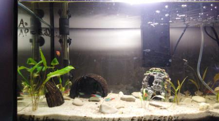 aquarium Mon 49L