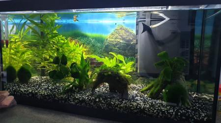 aquarium My dream
