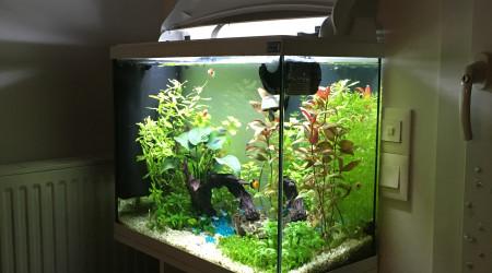 aquarium Aquatic Forest