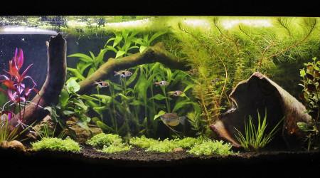 aquarium 200 litres asiatique low tech