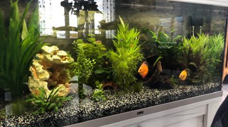 aquarium Discus and CO