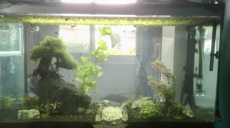 aquarium Chambre Jade