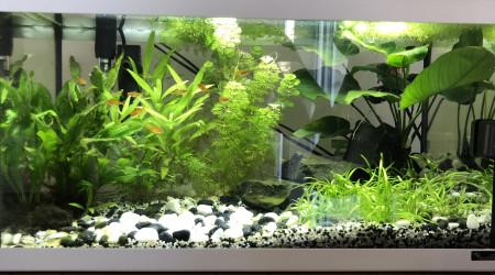 aquarium Premier aquarium 54L