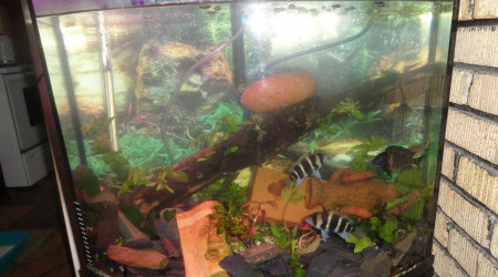 aquarium Bombera