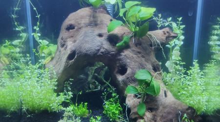 aquarium Amtra 20L