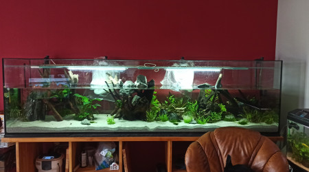 aquarium 1000L Scalaires