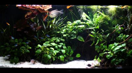 aquarium THE CAVE