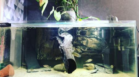 aquarium amc