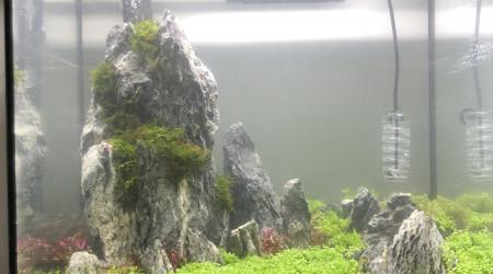 aquarium Aquarium Dry start method