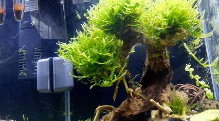 aquarium Crevettes