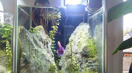 aquarium Lavander