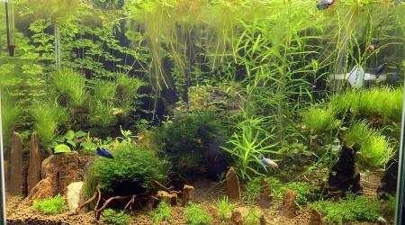 aquarium Betta home