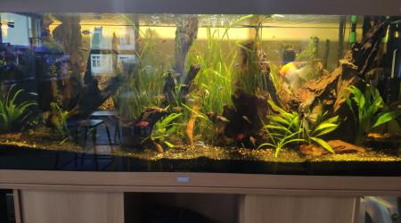aquarium ParaWood
