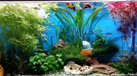 aquarium JOSE