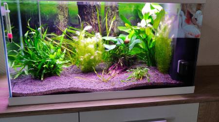 aquarium Ciano 60cm
