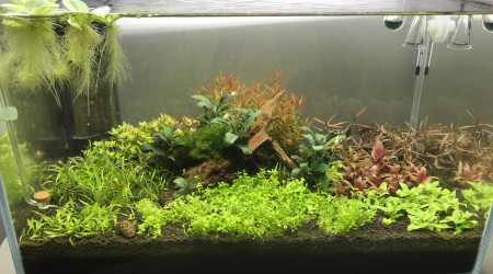 aquarium Shrimp dream