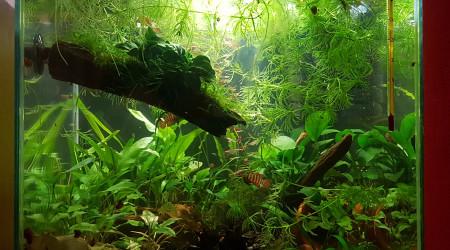aquarium Little Paradise