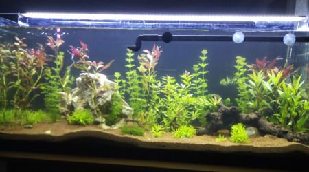 aquarium Communauté de l aqua