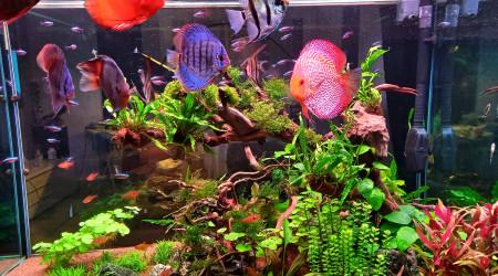 aquarium Bac planté