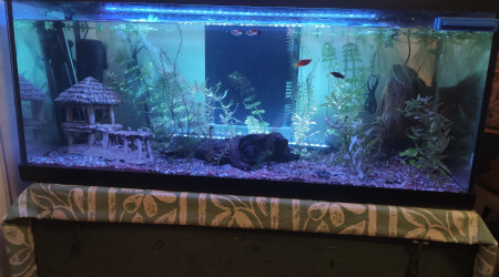 aquarium Aquarium zen