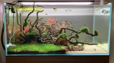 aquarium Optiwhite-250L