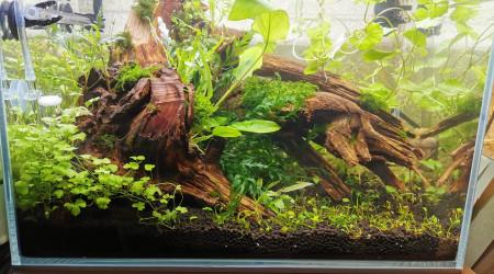 aquarium Tryscape microfish