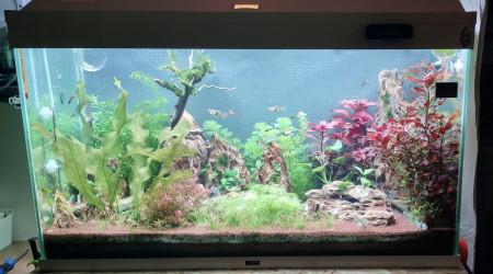 aquarium Hard Rock