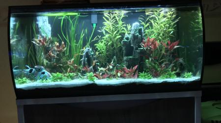 aquarium First