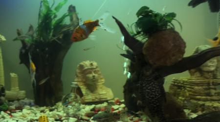 aquarium Premier auquarium