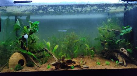 aquarium Attack on fish