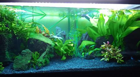 aquarium neons bleus crevettes