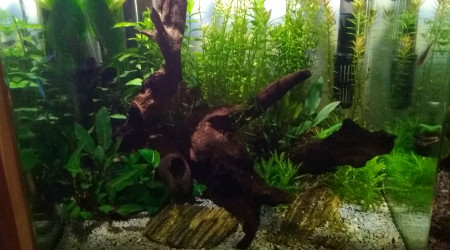 aquarium NanoCube40