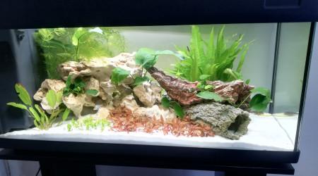 aquarium Aquarium eau douce