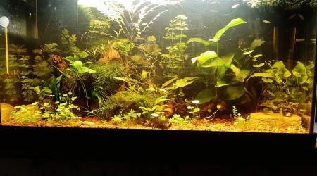 aquarium Nouvel aqua