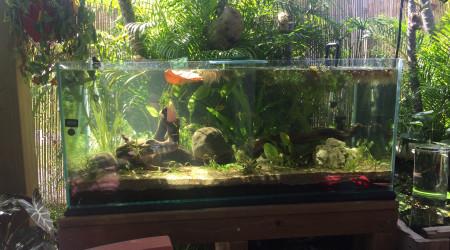 aquarium TERRASSE