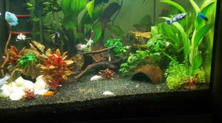 aquarium Linkoln