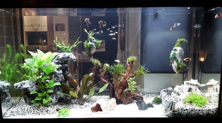 aquarium Nid