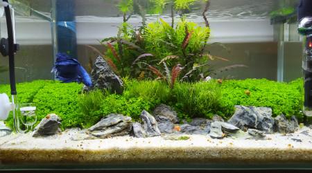 aquarium Betta - 23L