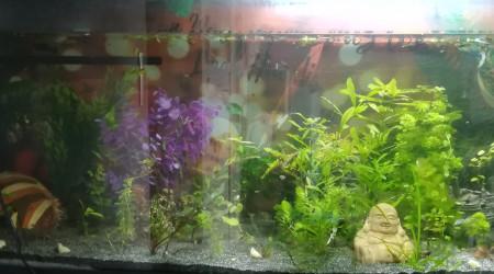aquarium 240L fourre tout communautaire qui prouve que la mixite ça marche