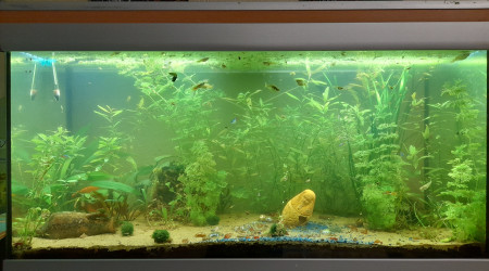 aquarium Cité en ruines