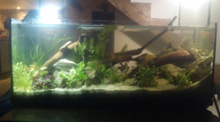 aquarium Delahaye