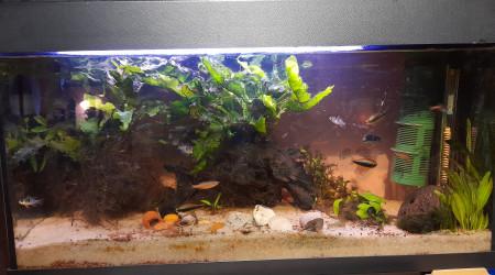 aquarium 1er aquarium