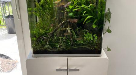 aquarium Asiatique