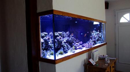 aquarium PatouZozo