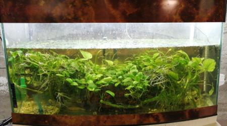 aquarium Bacadeau