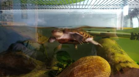 aquarium Maison de Kog 1